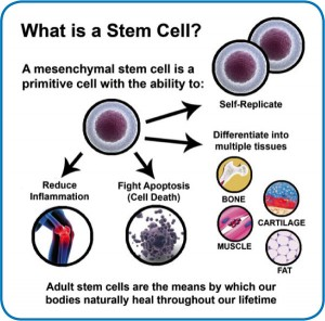 New Jersey Regenerative Medicine Stem Cell Therapy